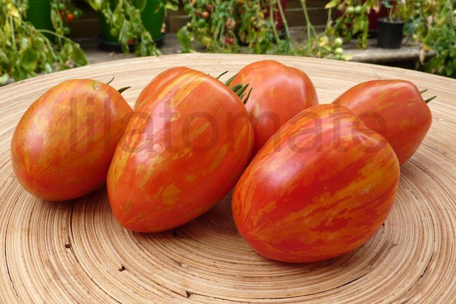 Tomate Gestreifte Pflaume Saatgut